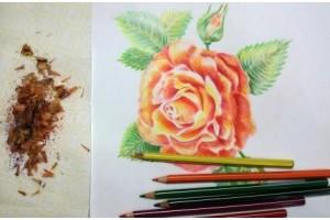 Как нарисовать розу. Видео урок